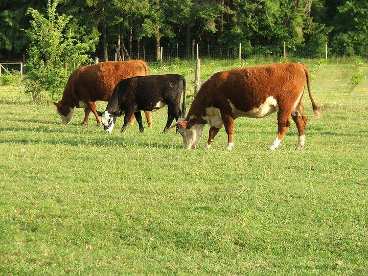 beef free range organic pasture raised beef
